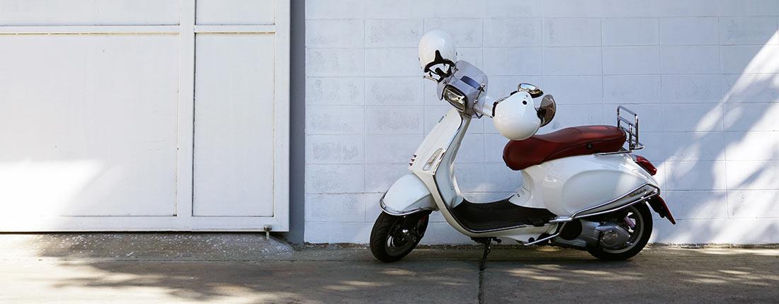 Scooter Rex